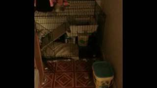 Sophie Go Potty:  Litterbox Trained Dog Using Littermaid