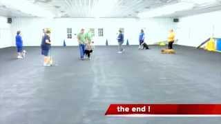 World Class Dog Kennels,  Dog Training, Chicago Il.