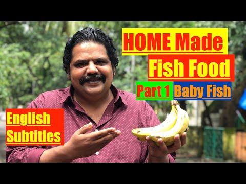 How To Make Homemade Fish Food | How To Make Baby Aquarium Fish Fry Food | Easy Fry (baby Fish) Food