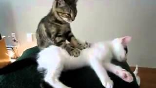 Кот делает массаж. Милая котейка. Котенок и кошка