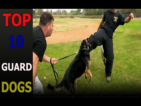 Top 10 guard dog breeds | Top 10 animals