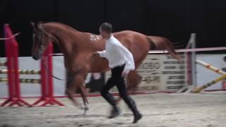 Будёновская лошадь. История и стандарт породы