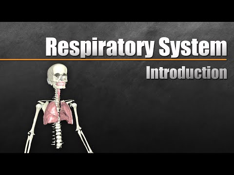 Intro to the Respiratory System