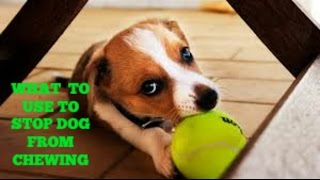 What To Use To Stop Dogs From Chewing | The Online Dog Training Review