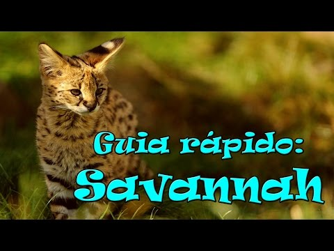 Guia Rápido: Savannah