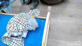 Кролики на празднике в детском саду.