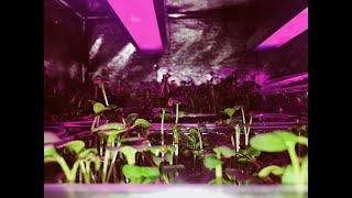 Познавательное видео о наших боксах, а так же ка наш свет влияет на растения.
