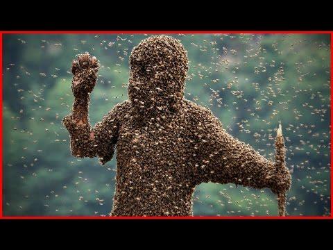 Самые опасные насекомые для человека. Мурашки по коже - Популярные видеоролики!