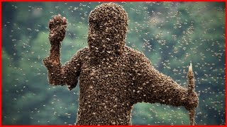 Самые опасные насекомые для человека. Мурашки по коже