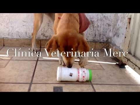 Diy juguete dispensador de alimento para perros for Animales de plastico para jardin