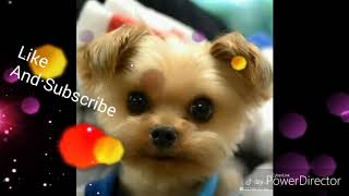 Funny and Cute Animals TikTok Compilation