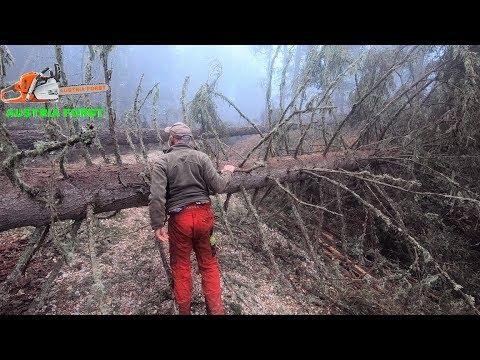 Forst weg Nach erneuten Sturmschäden Aufarbeiten