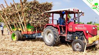 Mahindra Sarpanch 585 DI Tractor   New tractor with sugarcane Trolley