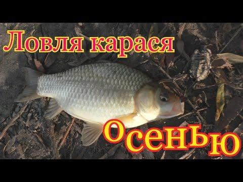 температура воды для осенней рыбалки
