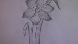 КАК НАРИСОВАТЬ ЦВЕТОК НАРЦИСС (очень просто, для начинающих)(Здравствуйте! Предлагаю вашему вниманию видеоролик, где я показываю, как очень просто нарисовать цветы..., 2014-12-29T11:36:48.000Z)