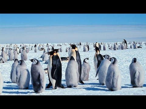 Команда телеканала «МИР» рассказала о встрече с пингвинами в Антарктиде