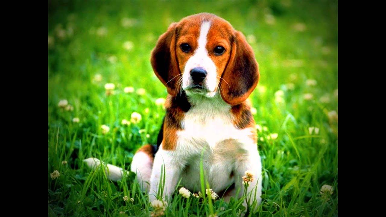 Animales domésticos. Los perros - YouTube