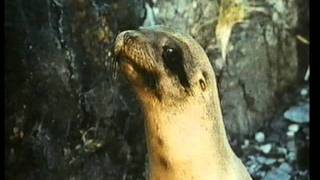 The Golden Seal (1983) Roadshow Home Video Australia Trailer