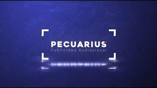 Reel Pecuarius 2020
