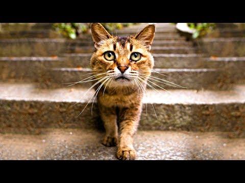 Жена попросила мужа вывезти ненужного кота за город, но, спустя три месяца, кот вернулся домой...