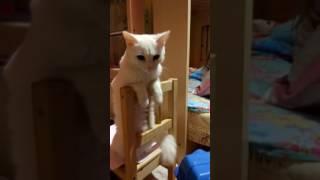 Кошка сидит за стулом