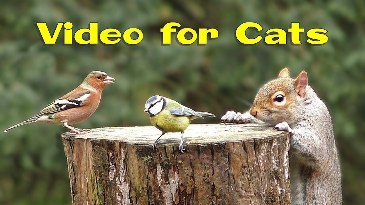 Download Videos for Cats and Dogs : 8 Hours of Birds and Squirrel Fun ✅