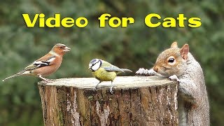 Videos For Cats And Dogs : 8 Hours Of Birds And Squirrel