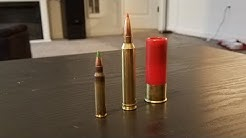 300 win mag vs 5.56 vs 12 gauge