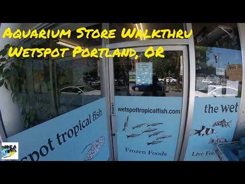 Aquarium Store Walkthrough - Wetspot Portland, Or