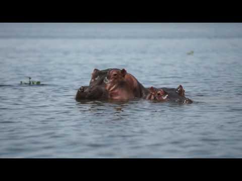 4K Lake Naivasha National Park (Ultra HD)