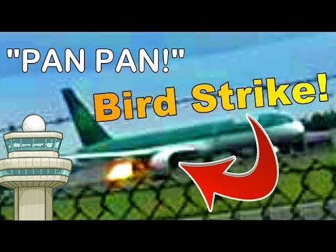 Aer Lingus 757 BIRD STRIKE At Dublin Airport! (ATC Audio + Real Footage)