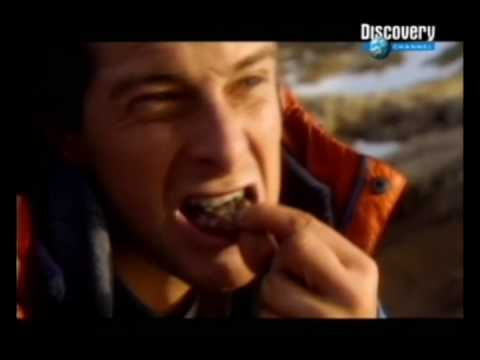 THE BEST OF BEAR GRYLLS [Man vs. Wild] - (HQ)