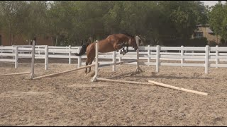 River and Boo loose jumping!