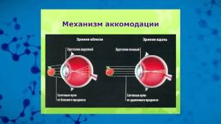 Нина ЧЕРЕДНИЧЕНКО - Опыт применения ДЭНС в офтальмо-педиатрической практике thumbnail