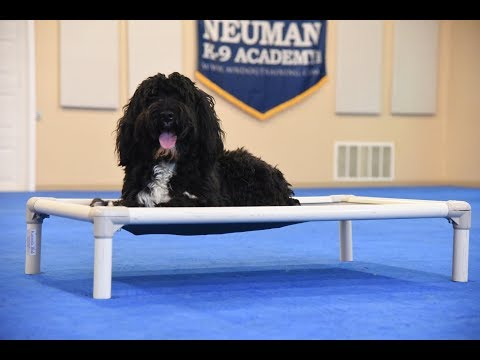 Stanlee (Portuguese Water Dog) Boot Camp Dog Training Video Demonstration