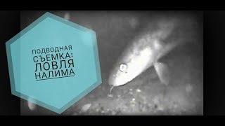 Подводная съемка ночной рыбалки (налим), Рыбинское водохранилище, 2016 год(Съмка на подводную камеру ночью. Налим подходит, но не берет, рука его не чувствует. Камера с ИК подсветкой...., 2016-02-02T10:38:32.000Z)