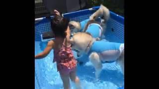 Девочка и три хаски устроили вечеринку в бассейне