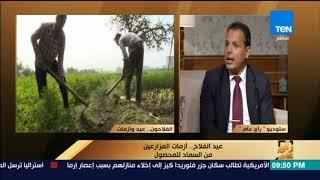 رأي عام - د. سعيد عبد التواب: مصر تتصدر دول العالم في إنتاج القطن فائق الطول