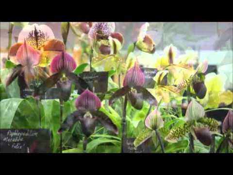 Portland Home Garden Show 2015 Youtube