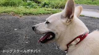 【関連動画】 攻撃的な紀州ミックスにやられちゃいました https://youtu...
