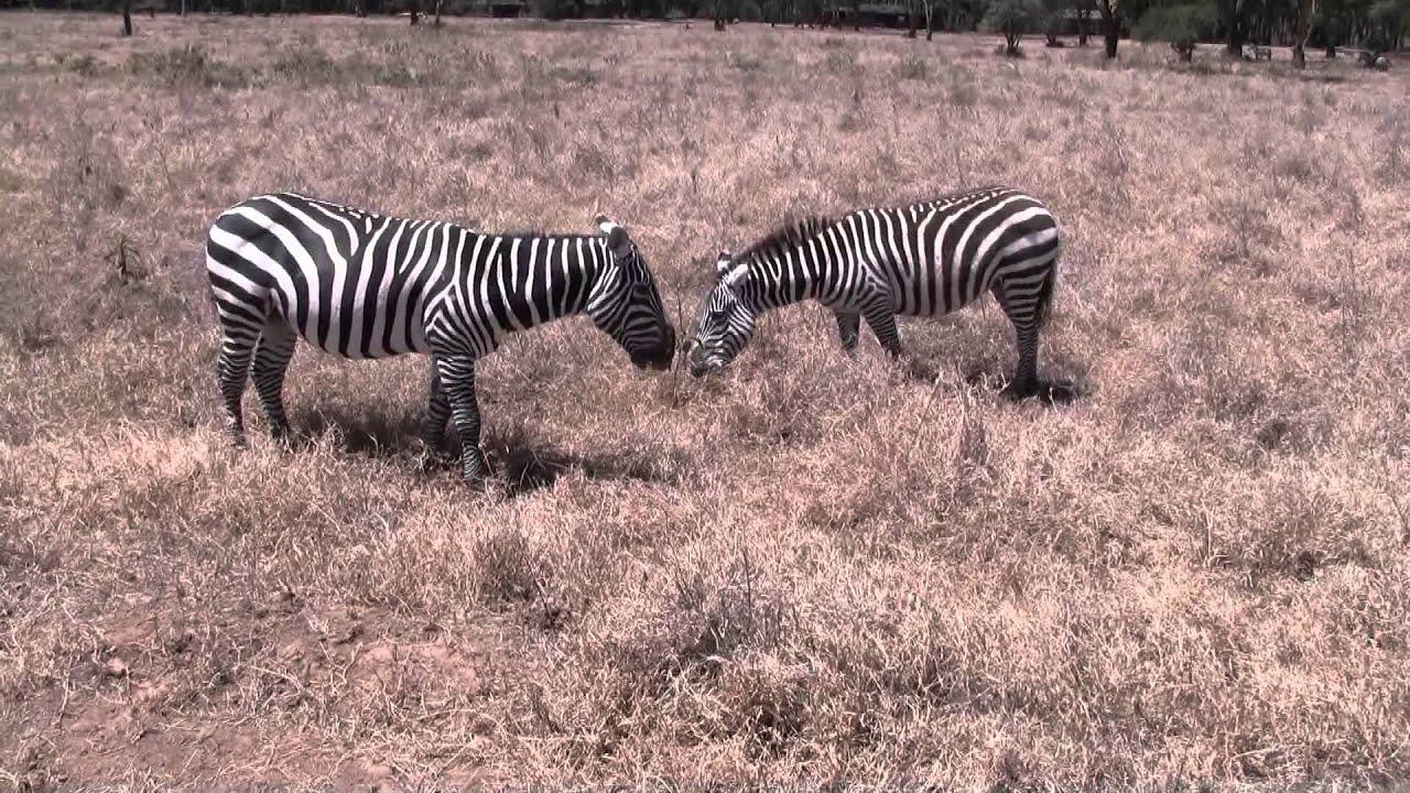 Africa - Wild Animals - YouTube