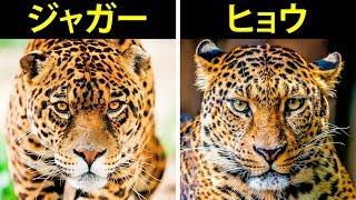 違いがわかりづらい動物12組