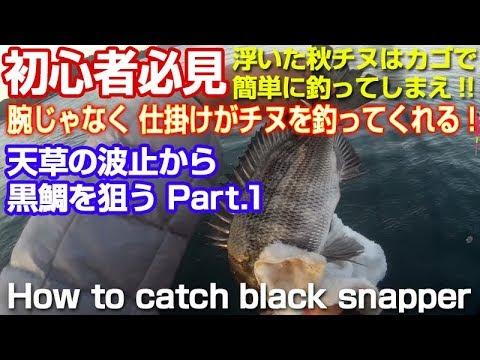 初心者必見誰でも簡単に堤防からチヌ黒鯛が釣れる仕掛けが魚を釣ってくれる|Black Sea Bream Fishing