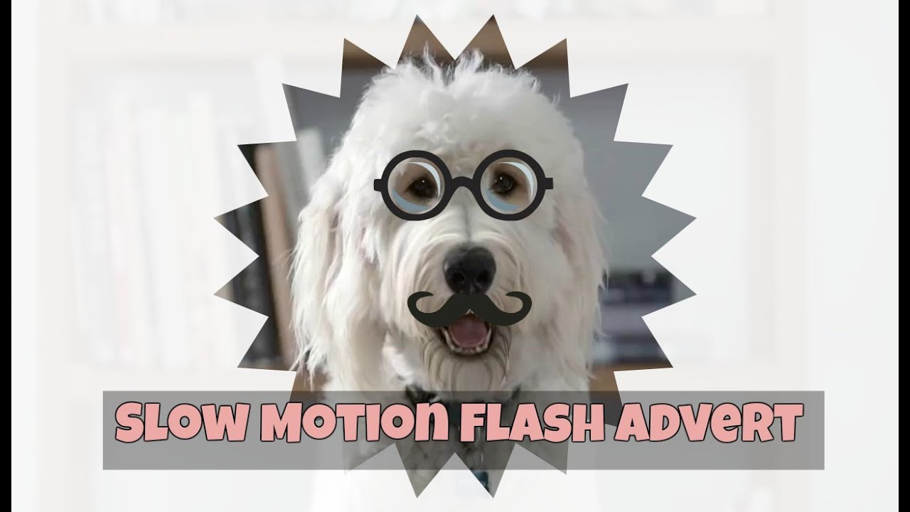 What Is The Breed Of Dog On The Flash Advert