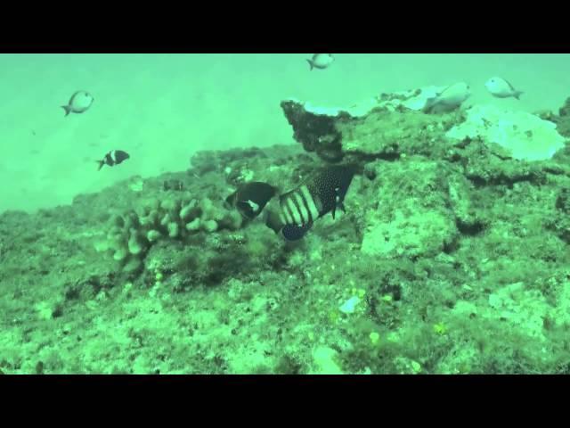 Invasive Species Underwater2Web