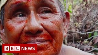 'I will give my last drop of blood for this forest' - BBC News