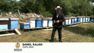 Masovni pomor pčela na jugu BiH - Al Jazeera Balkans