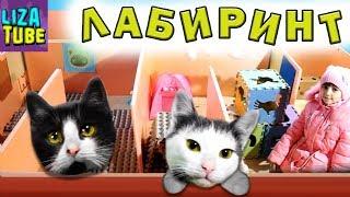Смешные коты Новогодний Лабиринт для кошек Два КОТА Коржик и Компот проходят ЛАБИРИНТ  \ LizaTube