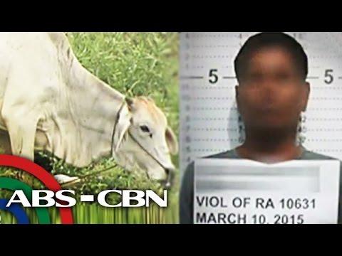 TV Patrol: Bago husgahan ang suspek sa 'cow rape,' panoorin ito