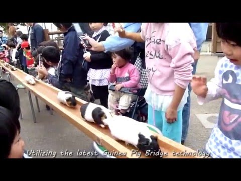 Guinea Pig Bridge Mix